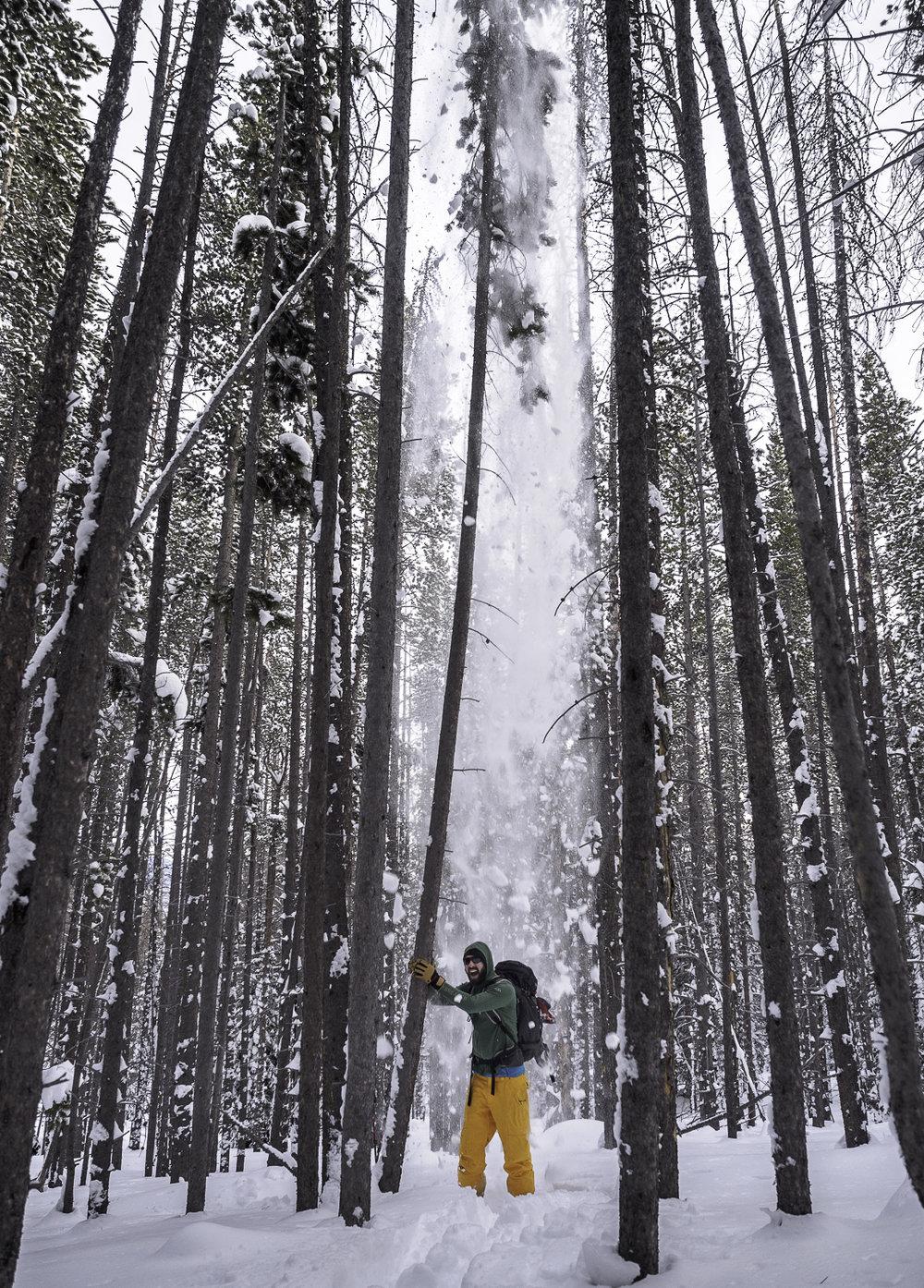 Tree Blizzard - Drew, Summit County