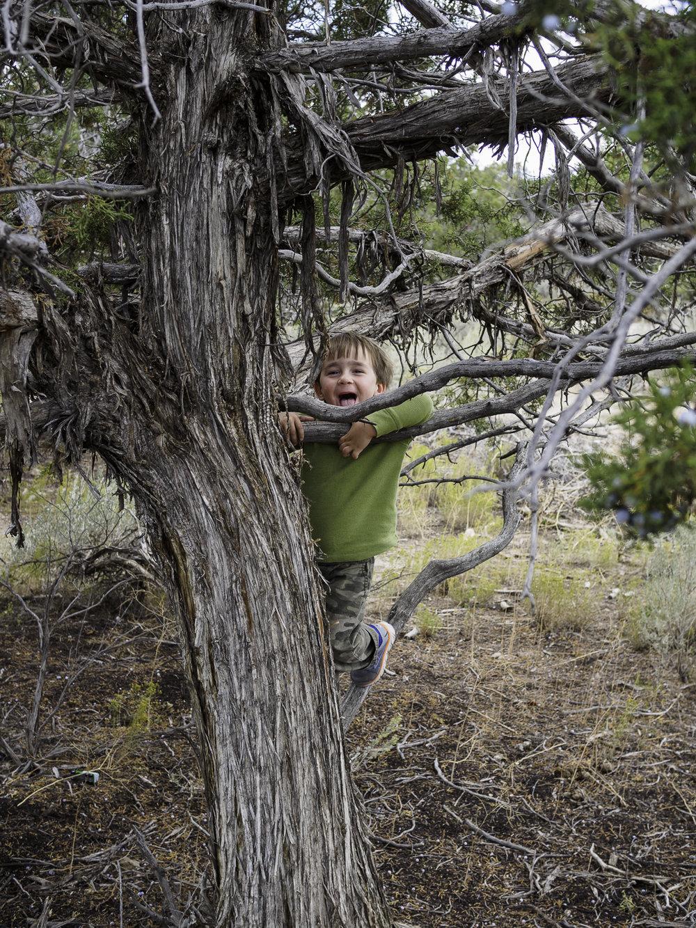 Tree Goof