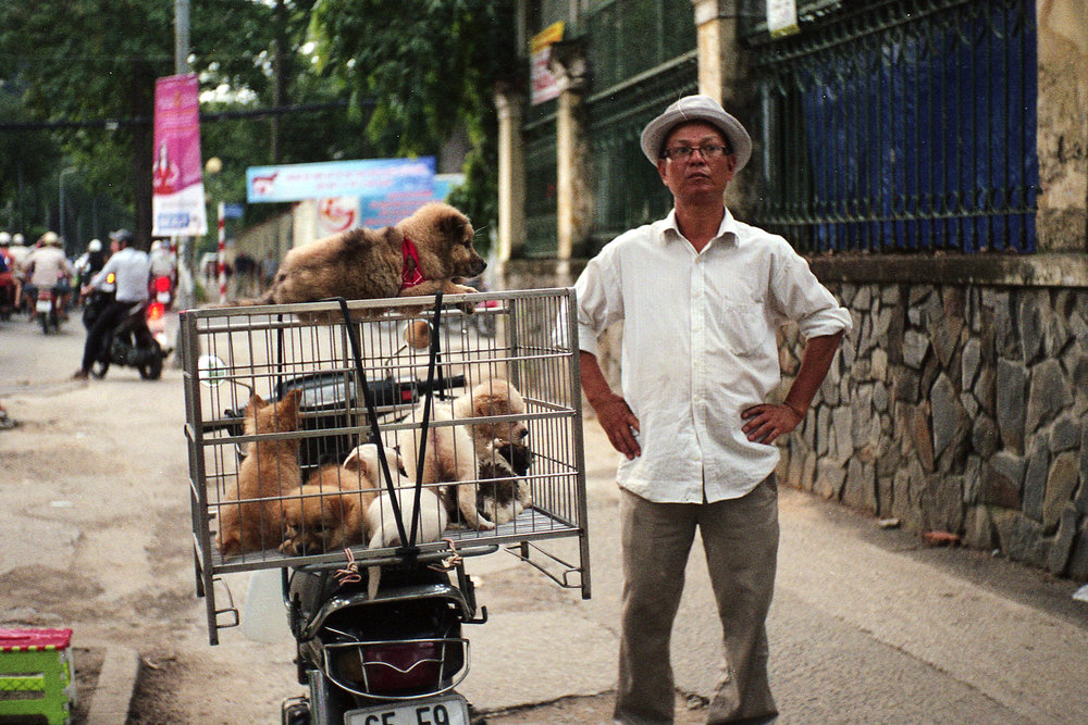 Saigon Pet Shop