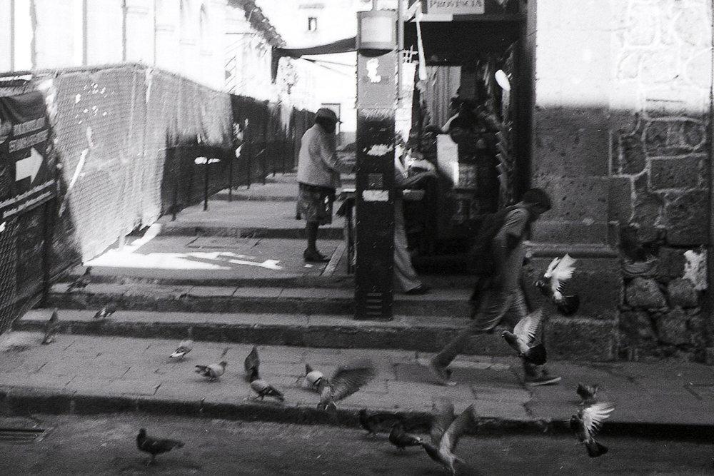 Street Birds