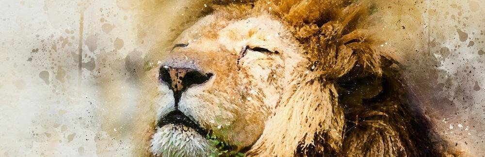 lion-1577197_1920.jpg