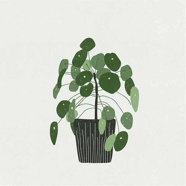 Quick doodle of one of my favorite plants - Pilea Peperomioides (Chinese money plant)