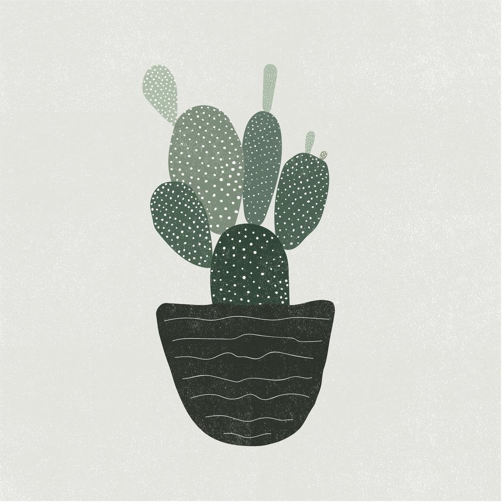 Cacti_BunnyEars-01.jpg