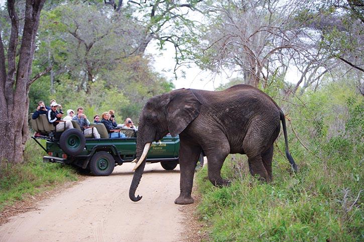 經過漫長耐心地尋覓,遊客們終於看到了野生大象。