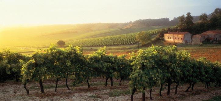 Borderies葡萄園──景色如畫的法國鄉村中,被授權生產干邑的六個區域之一。