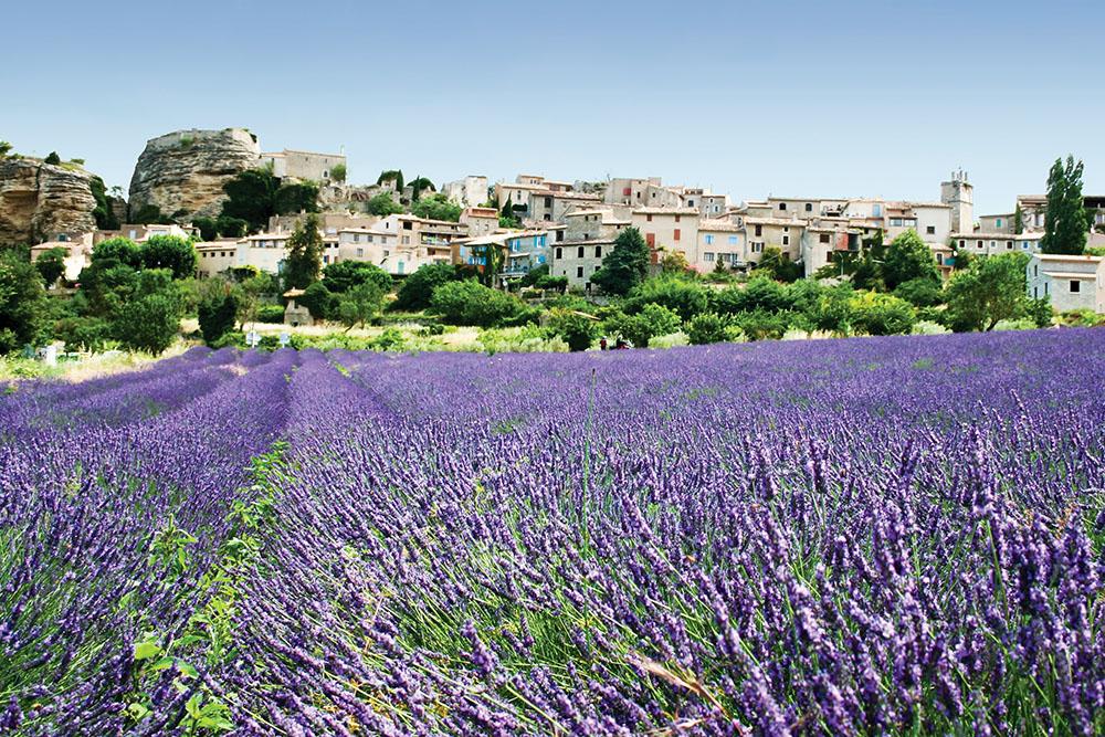 環繞著Grasse有無盡的花田,有薰衣草(如右圖)、茉莉和其它夏季綻放的花卉。
