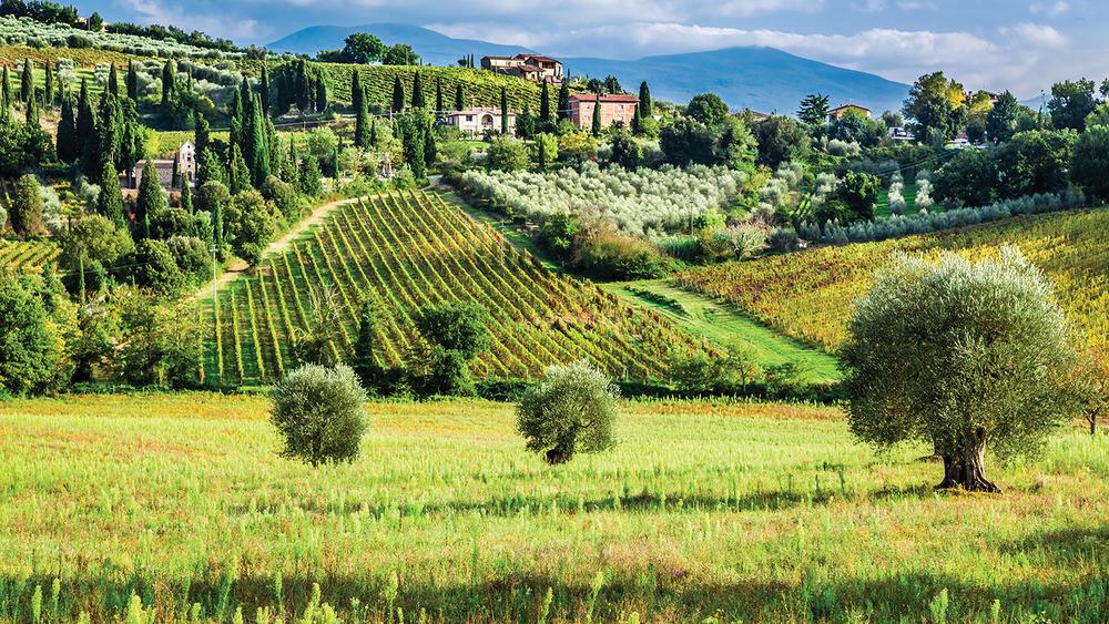 全世界品質最好,價格最昂貴的橄欖油,正是出自這片種植園。