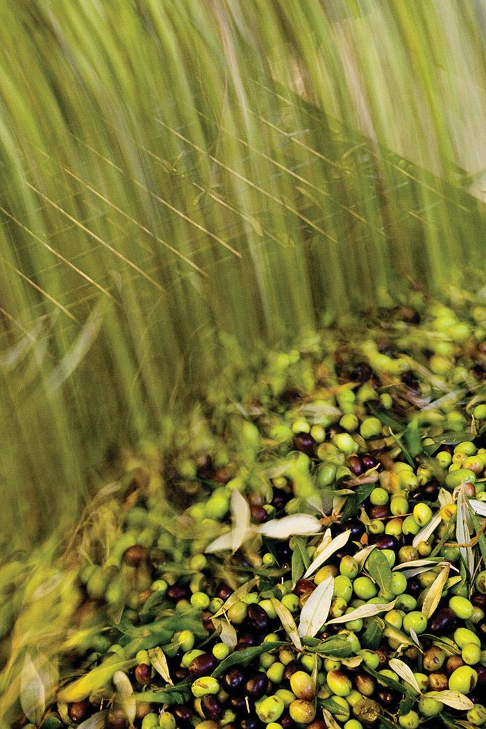 美國加州McEvoy農場的特級初榨橄欖油,採用低於二十七攝氏度的冷榨工藝,酸度低於0.5%,符合總部位於西班牙首都馬德里的國際橄欖油委員會的標準。