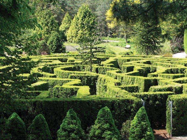 VanDusen植物園中的伊莉莎白迷宮。