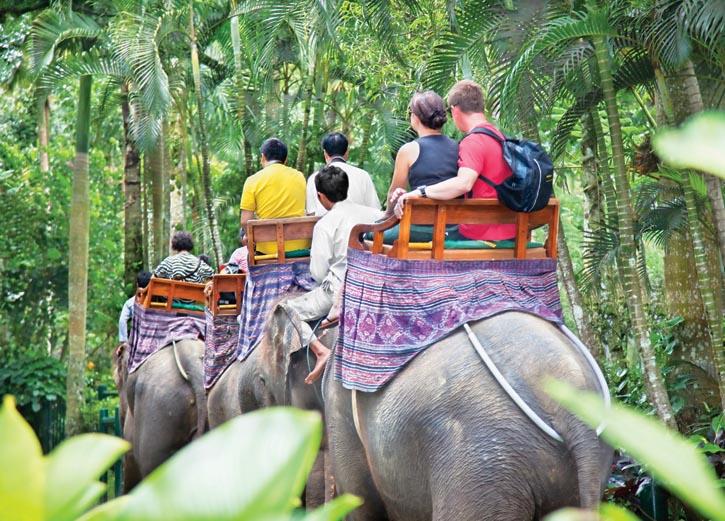 Bakas村落的野生大象樂園
