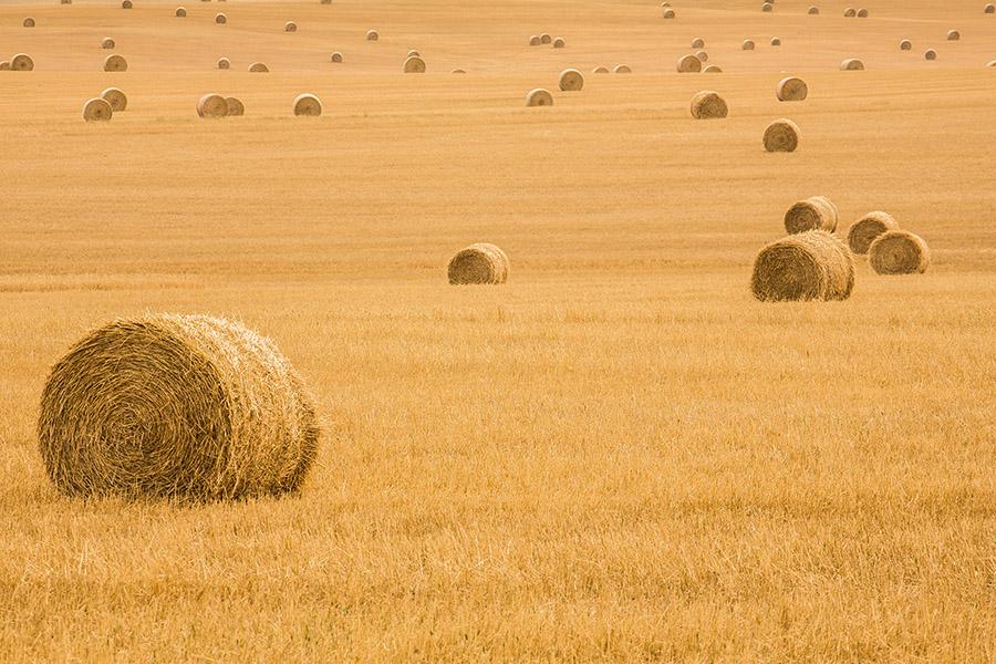 《乾草垛》,北達科他州