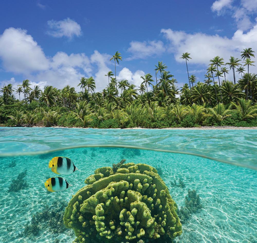 黑珍珠只有在圖中這種環礁湖內才可以找到。