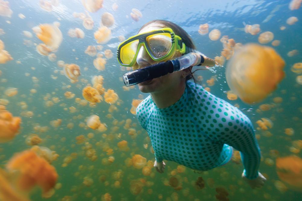 帕勞群島上的水母湖是享譽全球的潛水聖地,這座海中環礁湖裏的水母並沒有毒性。