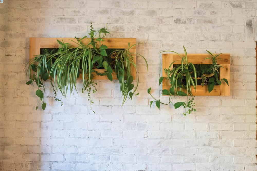 綠色植物原木裝飾框,帶有自動澆水系統  bynaturedesign.ca