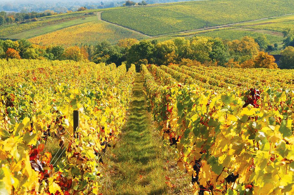 桑賽爾葡萄酒中所帶有的獨特礦物質味道,源於土壤中所含的硅石類礦物。Photoprofi30 / shutterstock.com