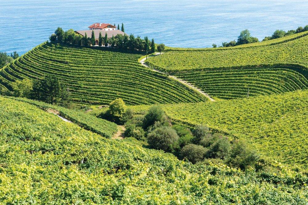 格塔里亞海邊的葡萄園梯田。milosk50 / Shutterstock.com