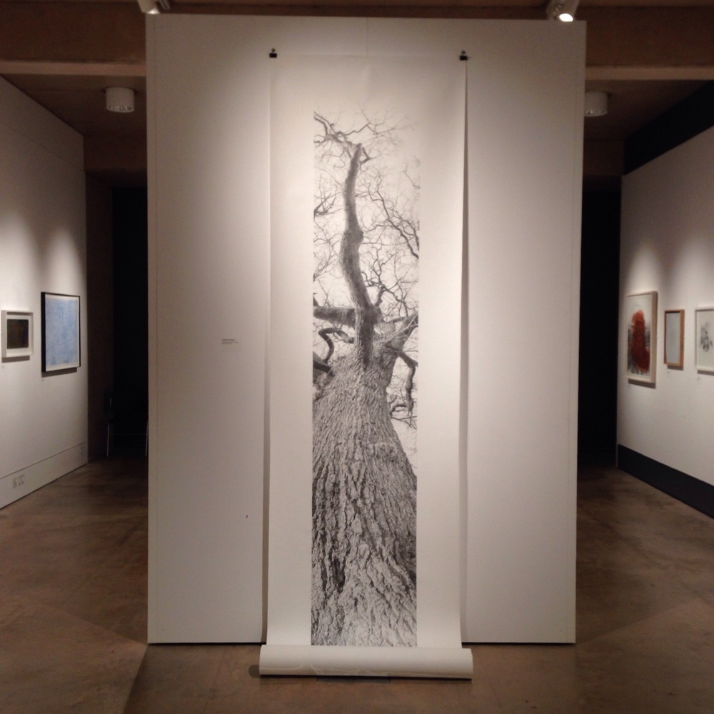 Vertical Panorama: Oak Tree by Hannah Downing