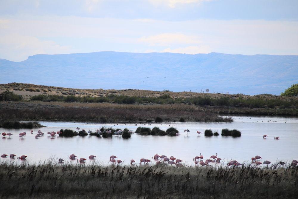Flamingos on the Lake