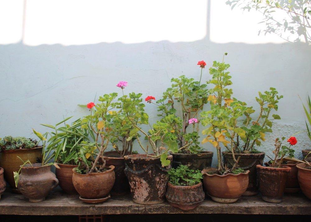 Case Verde Plant Problem