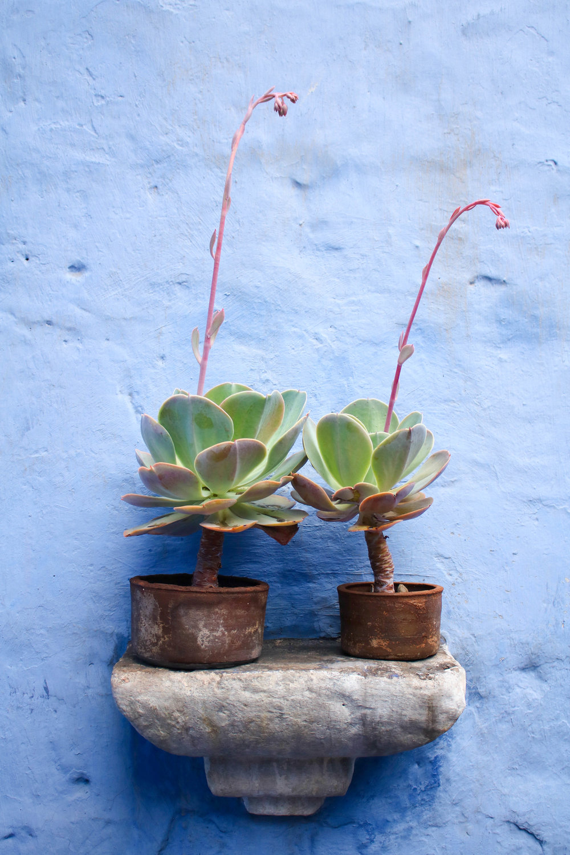 Succulents and Blue Walls