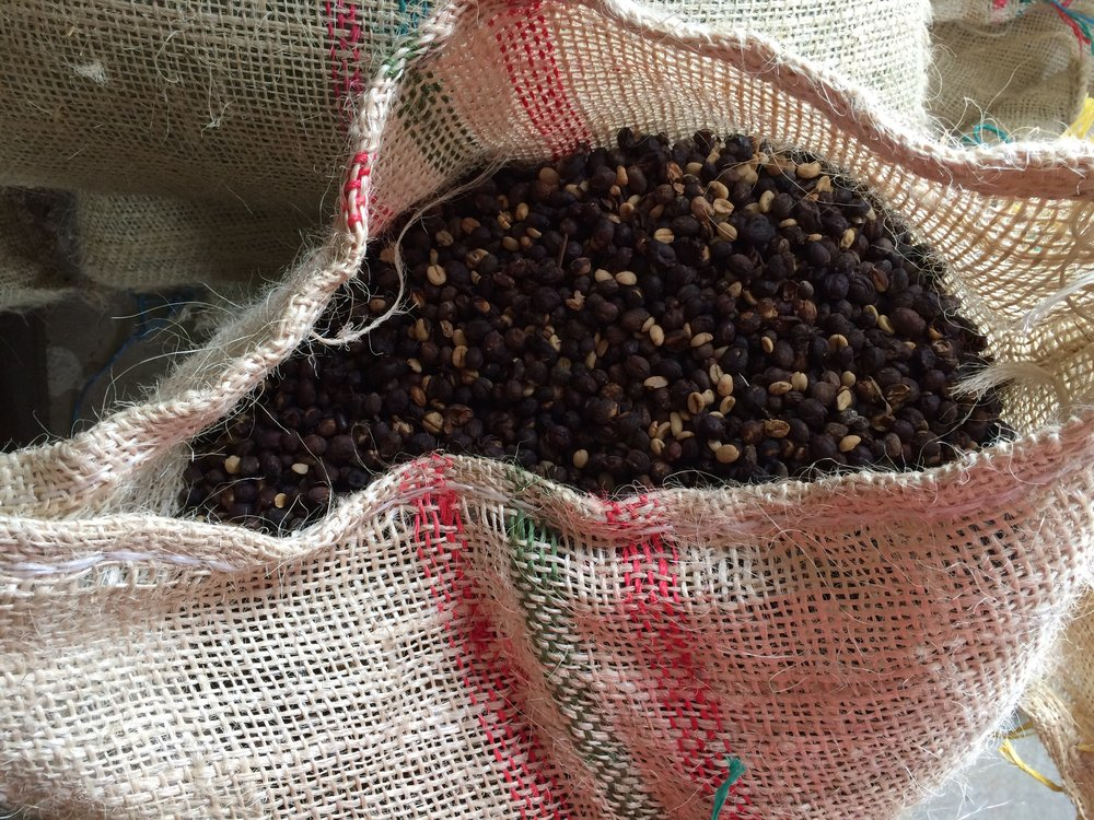 Crushed, Dried and Sorted Coffee in the Cocora Valley, Colombia