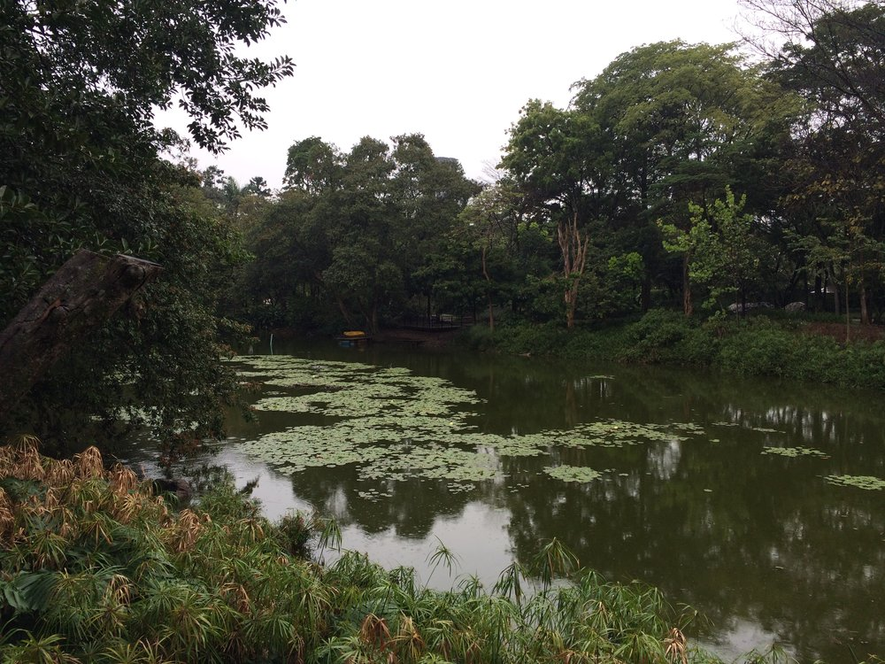 The Lake in the Botanical Garden of Medellín, Colombia