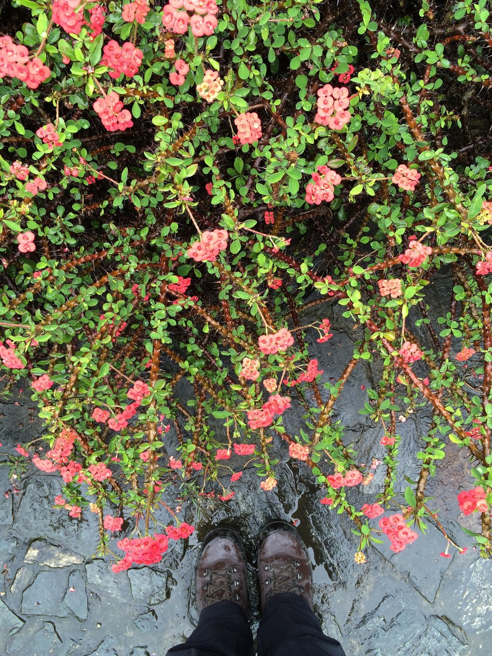 Vibrant Flowers Doused in Rainwater at the Medellín Botanical Gardens in Colombia