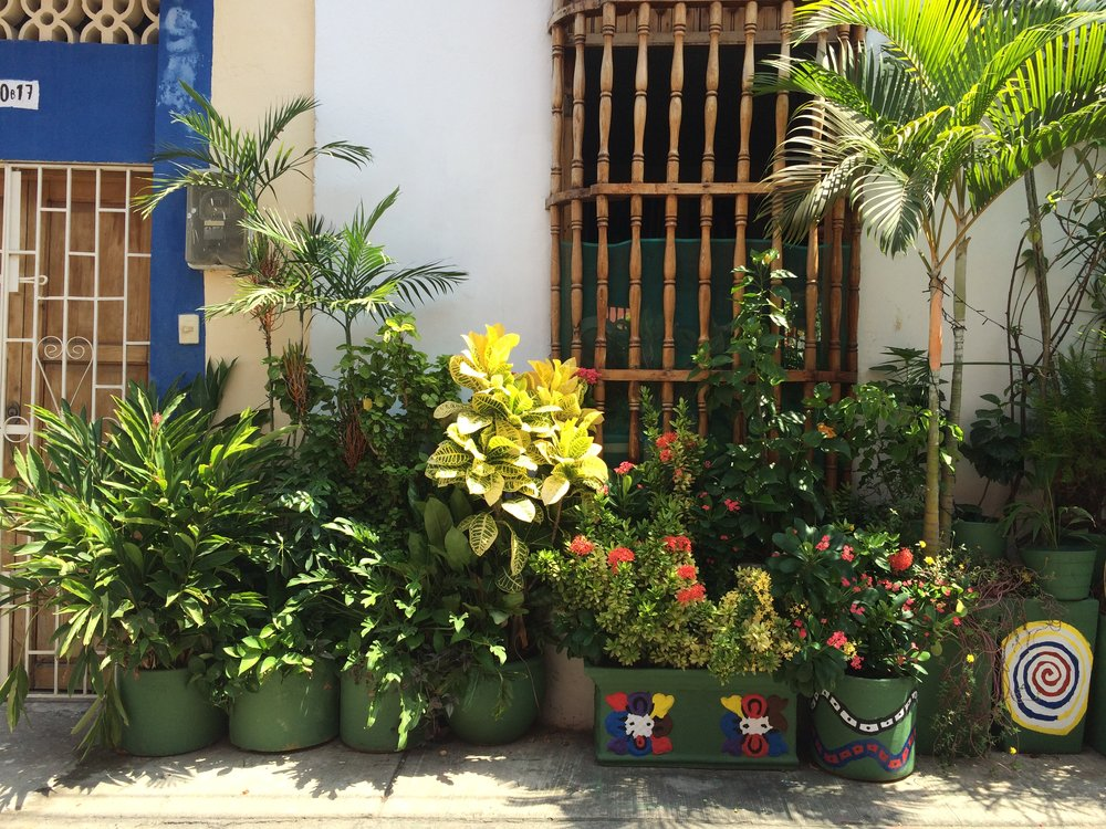 All the Plants in Cartagena, Colombia