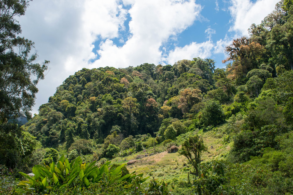 Beautiful Nature in the Highland Region of Boquete in Panama