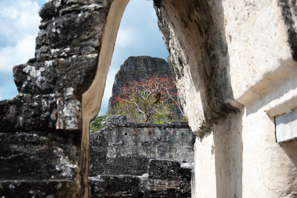 Nature and Stone in Tikal, Guatemala