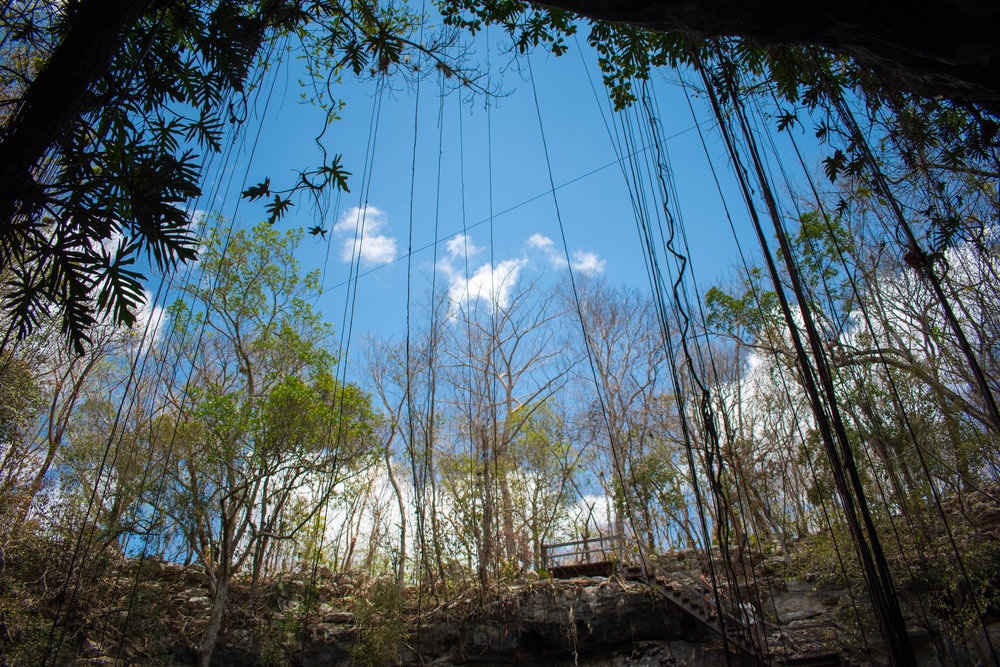 Vines and Roots at Ek Balam Cenote in Mexico
