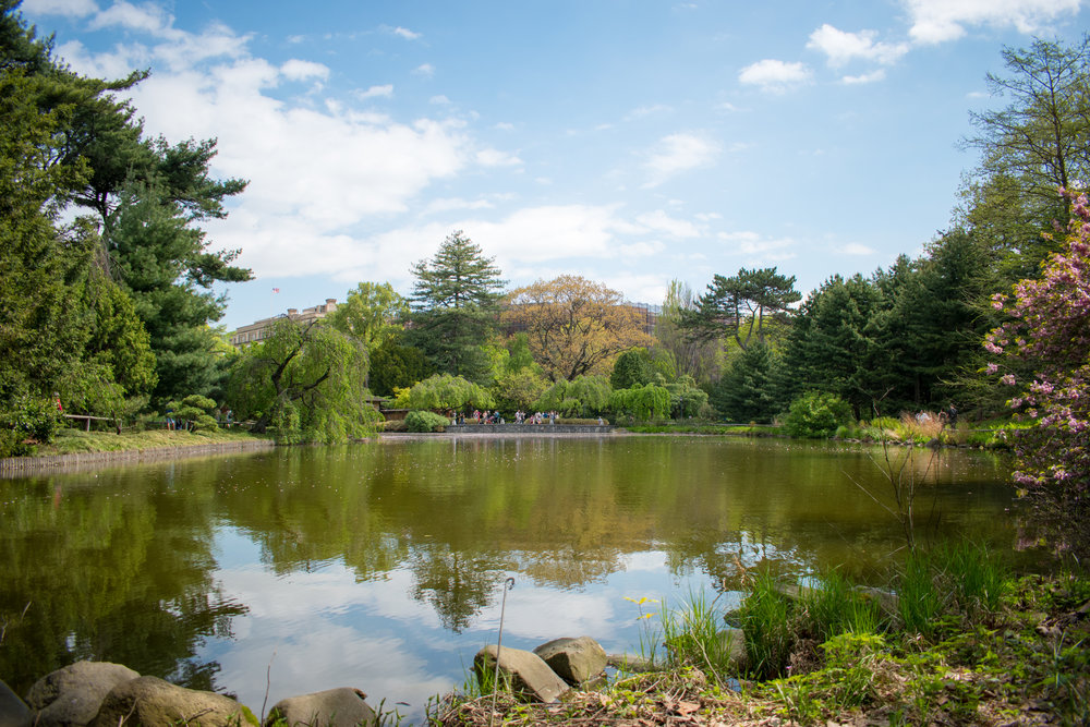 The Brooklyn Botanical Garden Lake, New York
