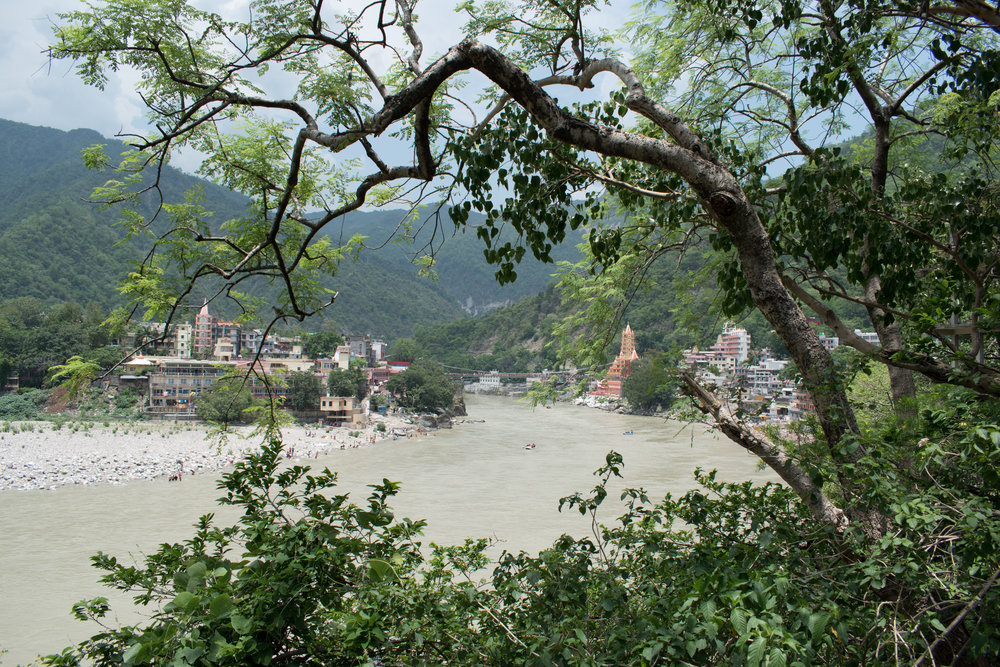 The Sacred River Ganges Framed By Trees in Rishikesh