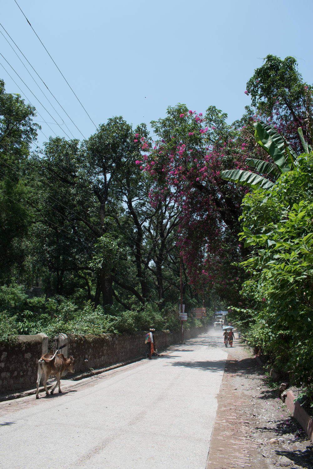 Taking A Walk Along The Roads Of Rishikesh In India