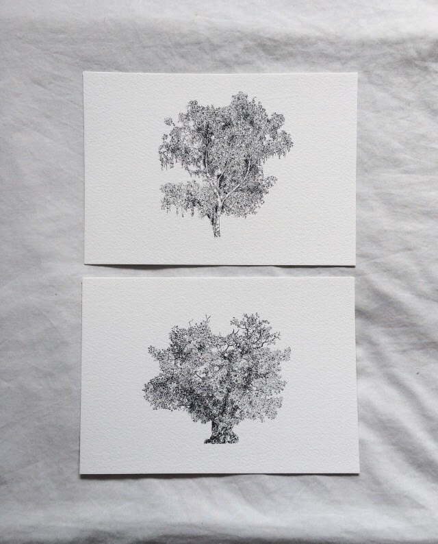 Silver Birch and Veteran Oak by Claire Leach