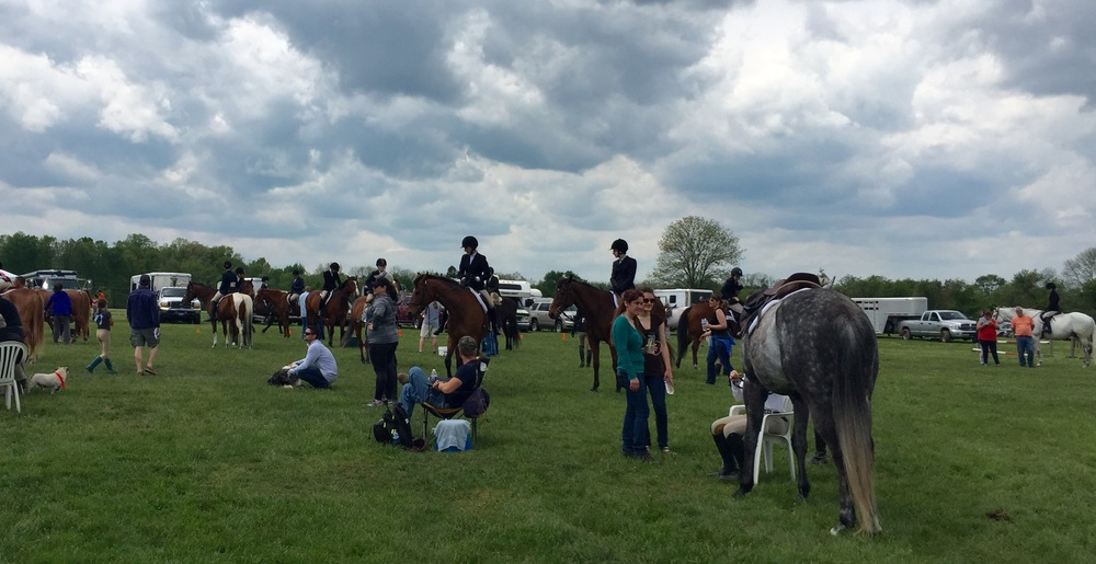 Just to prove that there were a lot of horses. I was not lying. Imagine 360 degrees of this.
