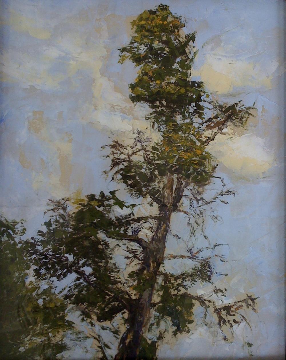 Tuscany Pine