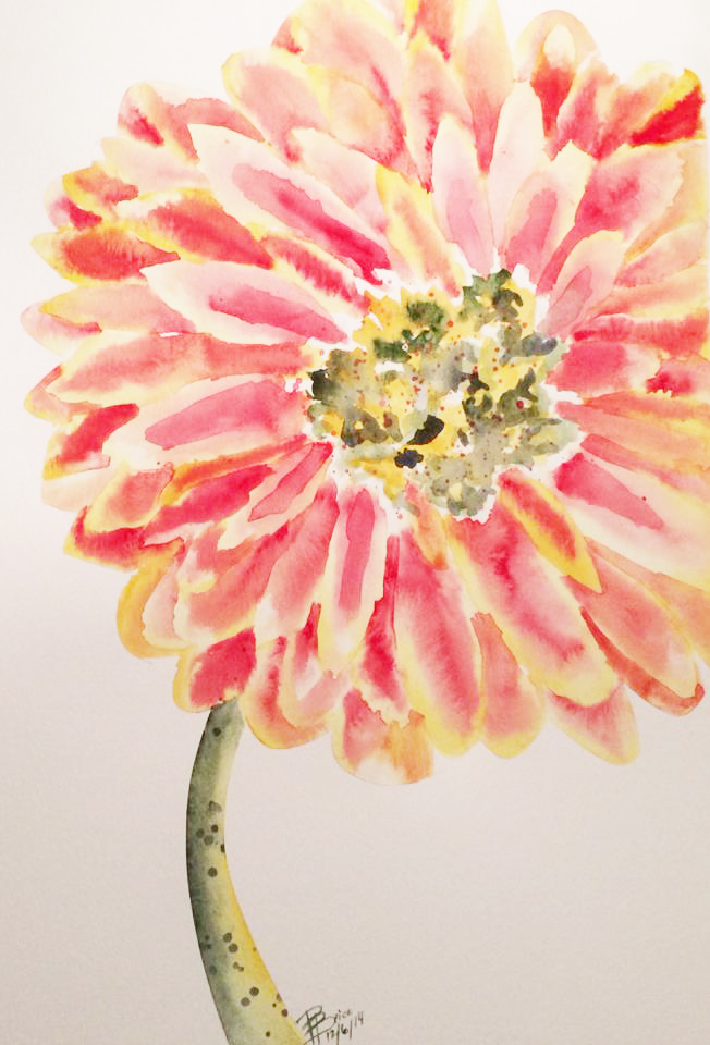 Gerber Daisy - Yellow/Red