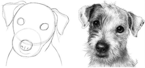 Drawing Made Easy: Realistic Pet Portraits with Jenel Bode ...Three Headed Animal Drawing