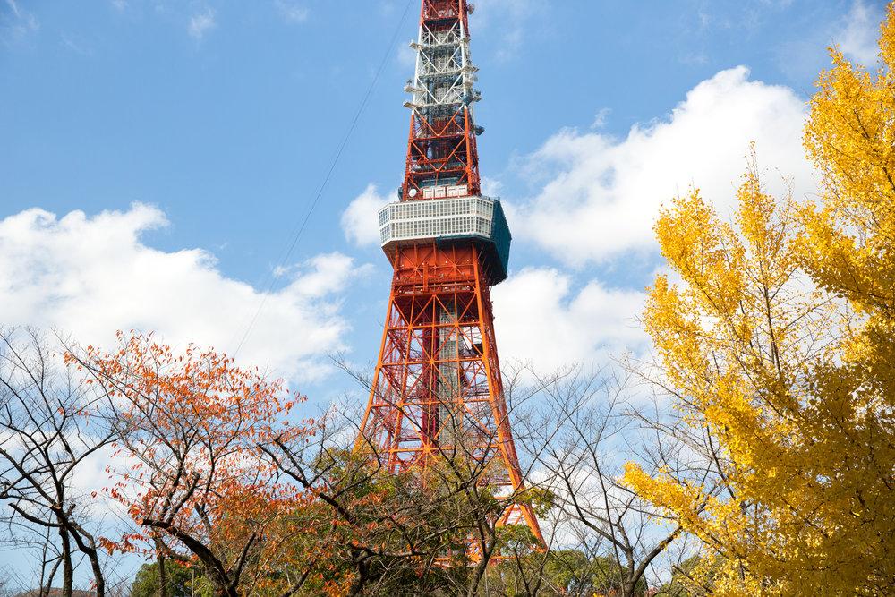 5785-japan-urban-autumn-lights.jpg