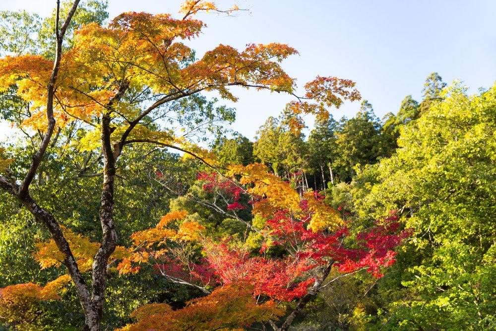 5051-japan-nature-autumn-colors.jpg