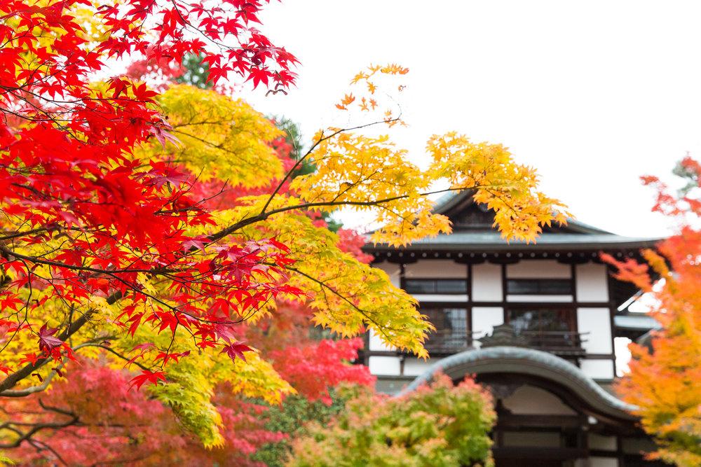 5185-japan-nature-autumn-colors.jpg