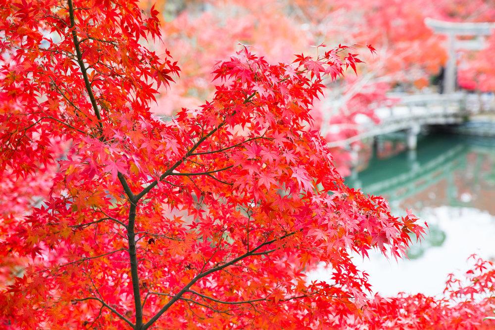 5201-japan-nature-cold-winter.jpg