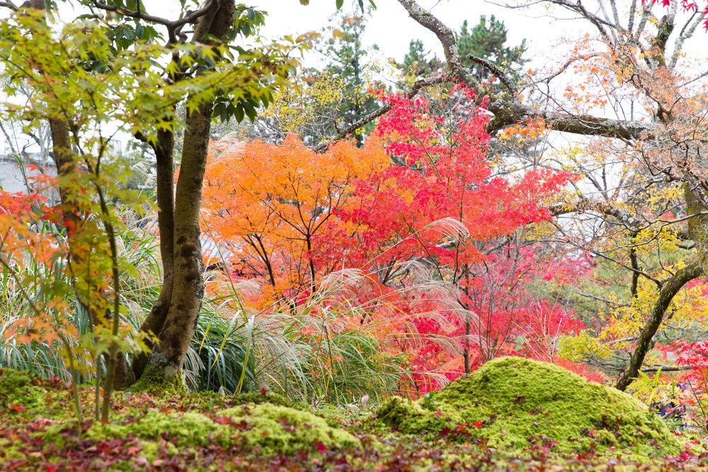 5214-japan-nature-cold-winter.jpg