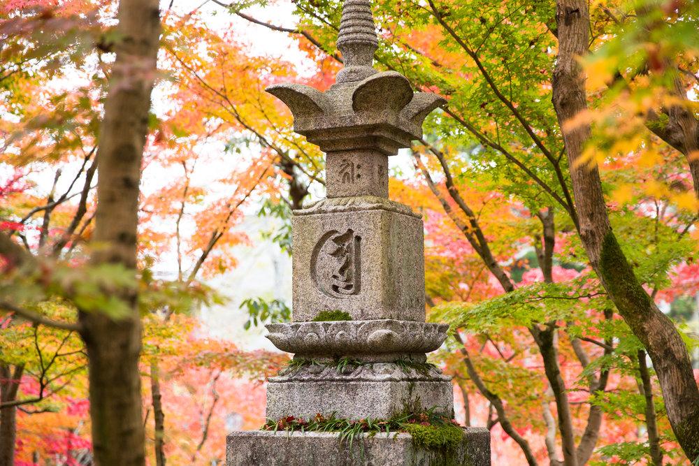5226-japan-nature-cold-winter.jpg