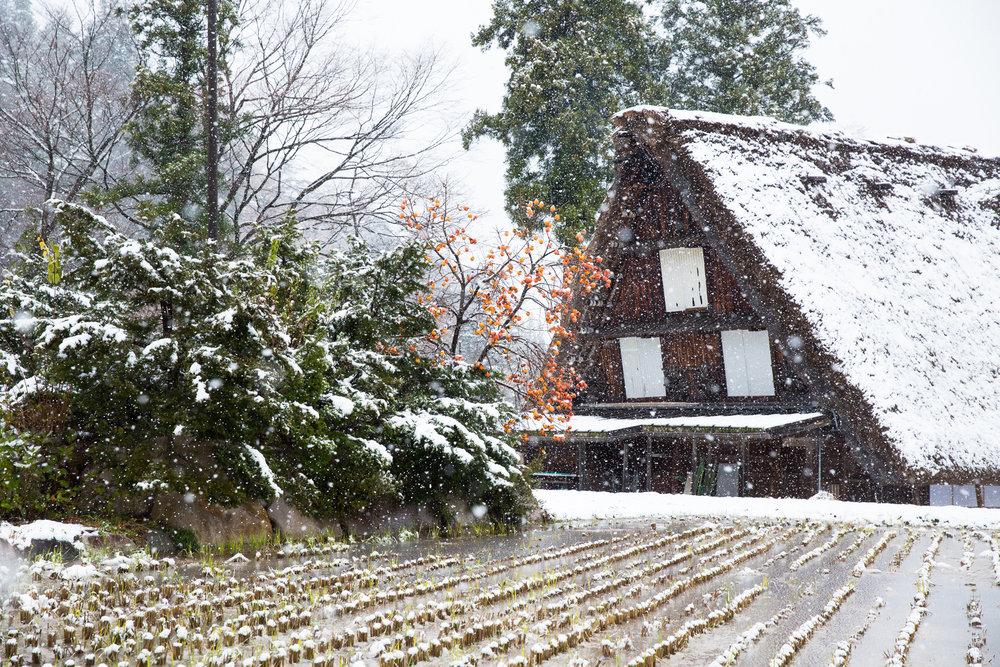5664-japan-nature-cold-winter.jpg