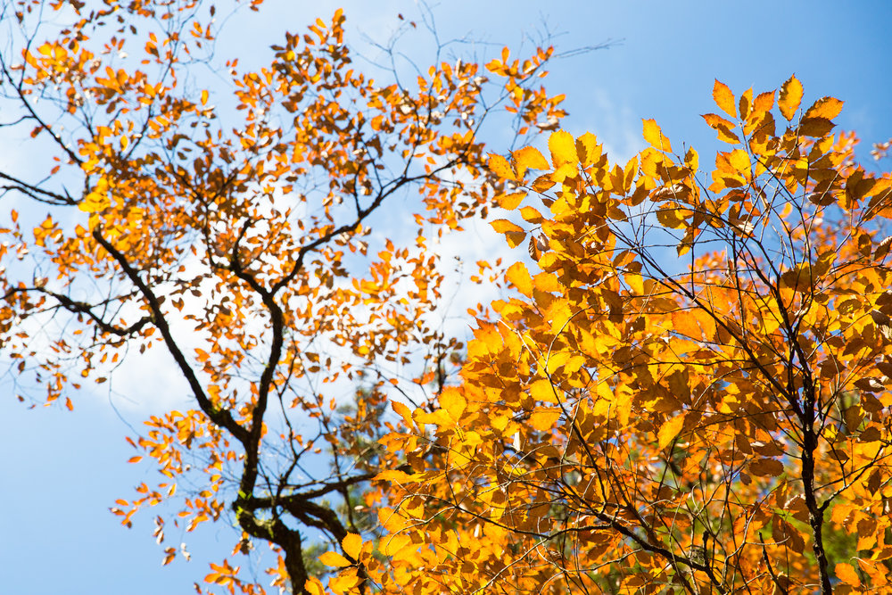 6423-japan-nature-frozen-time.jpg
