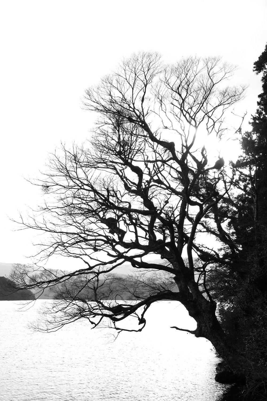 6872-japan-nature-classic-perspective.jpg