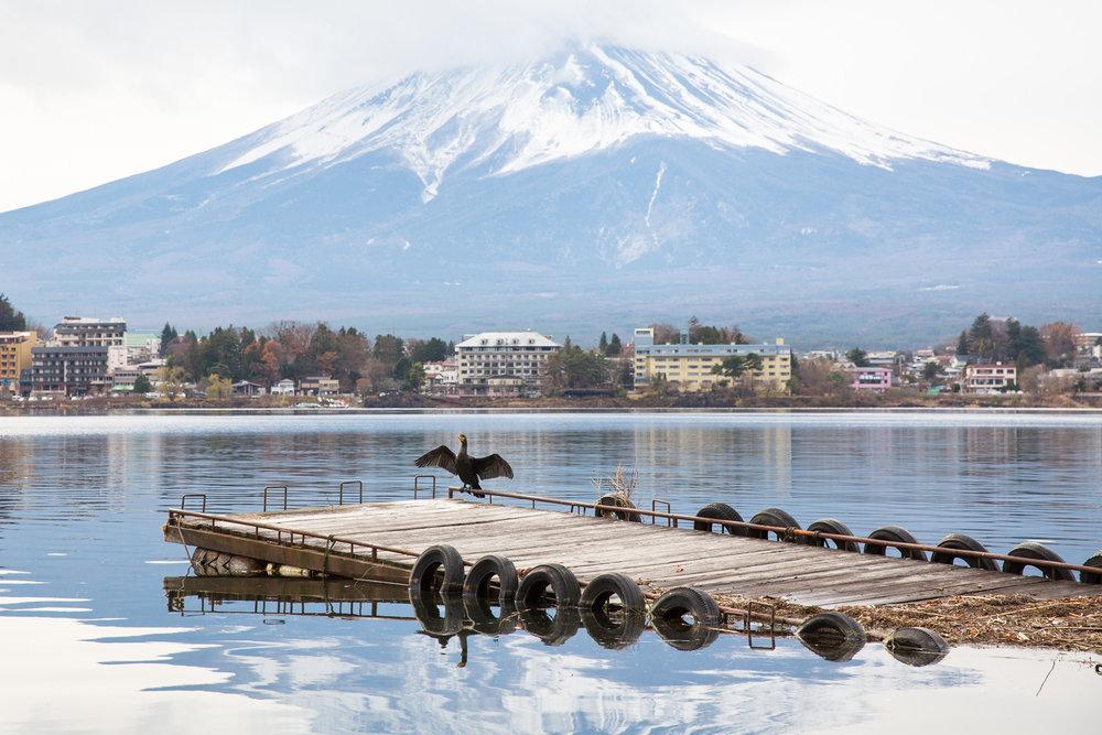 7111-japan-wildlife-giant-fish.jpg