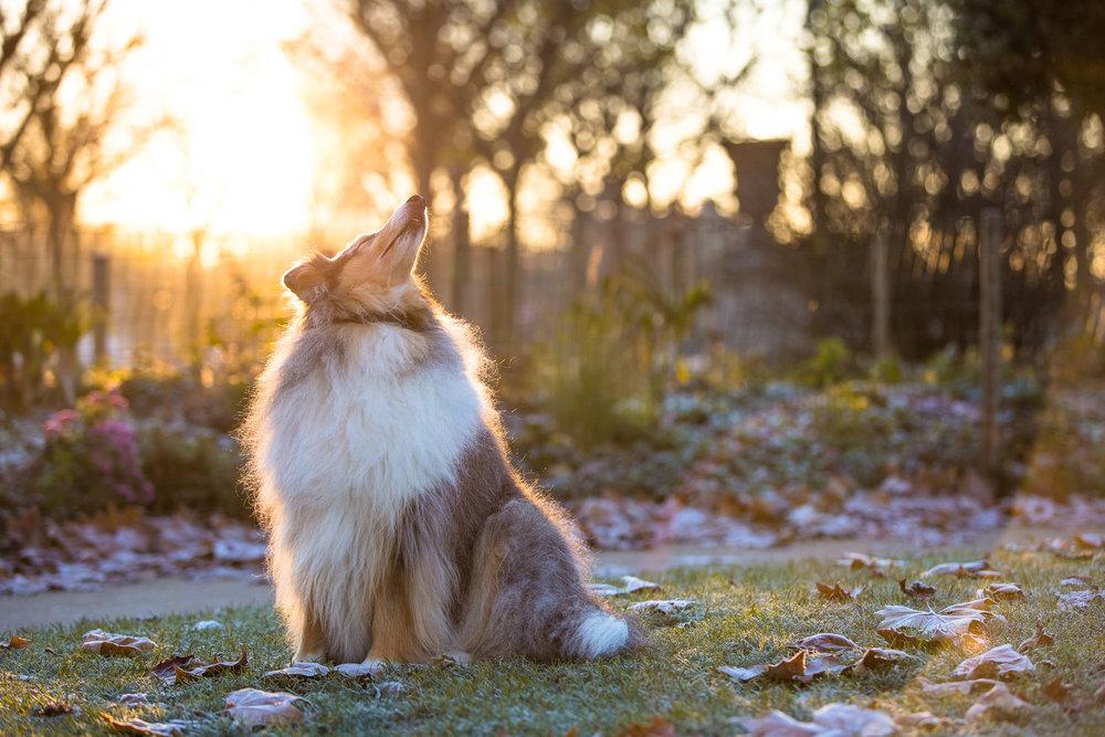 9586-parisian-pet-dog.jpg